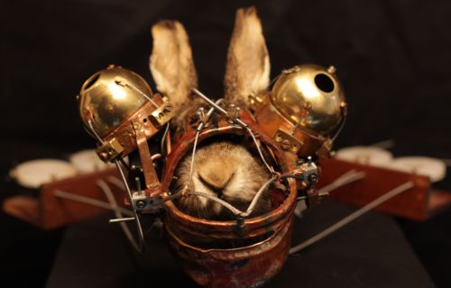 convento_rabbit